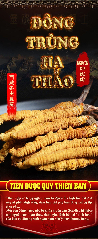 Con đông trùng hạ thảo Tây Tạng cao cấp 3gr/con