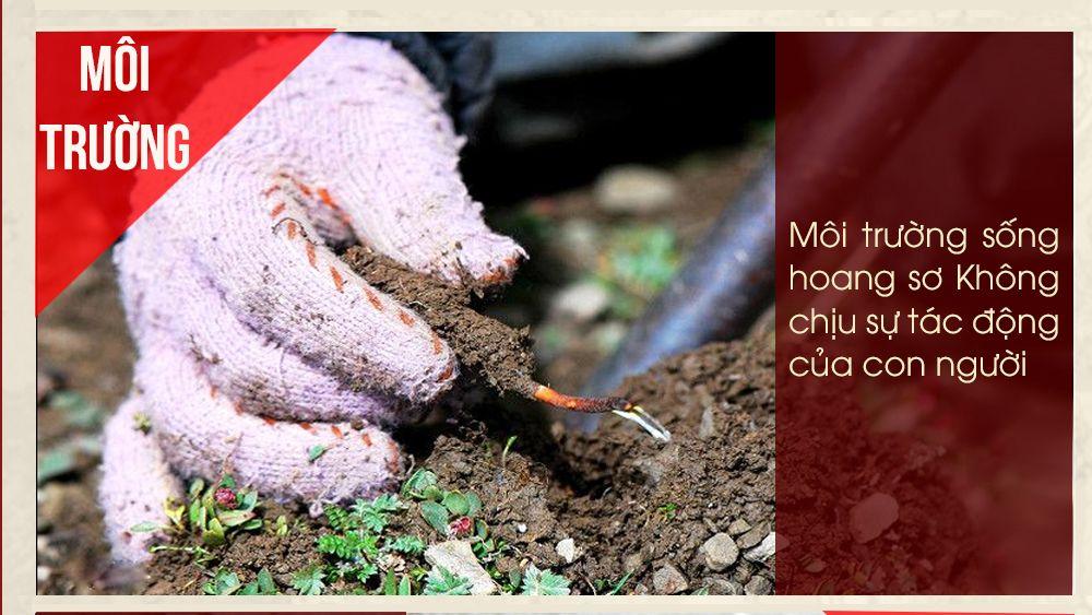 Các yếu tố làm nên giá thành của đông trùng hạ thảo Tây Tạng