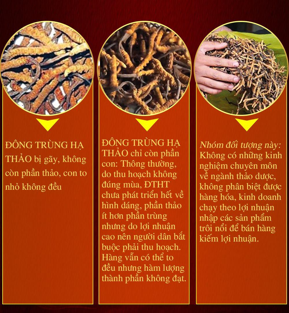 Con đông trùng hạ thảo nguyên con sấy khô loại cao cấp