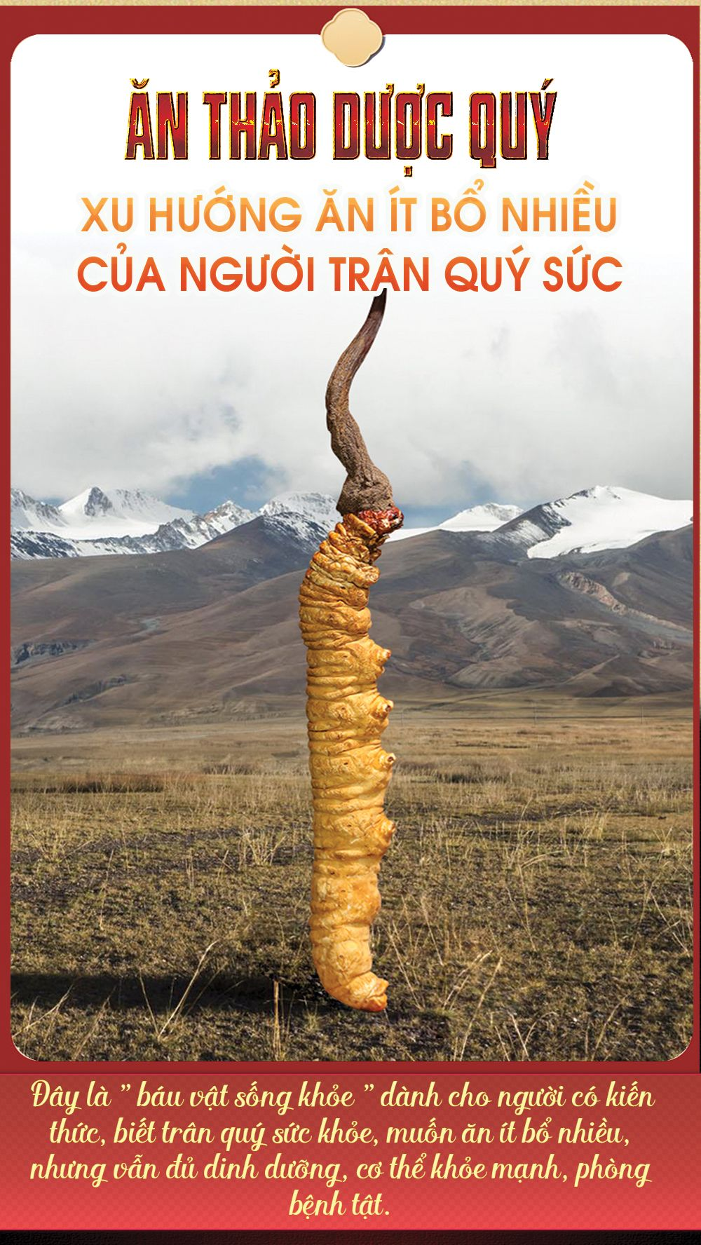 Quy trình hình thành nên đông trùng hạ thảo thiên nhiên Tây Tạng