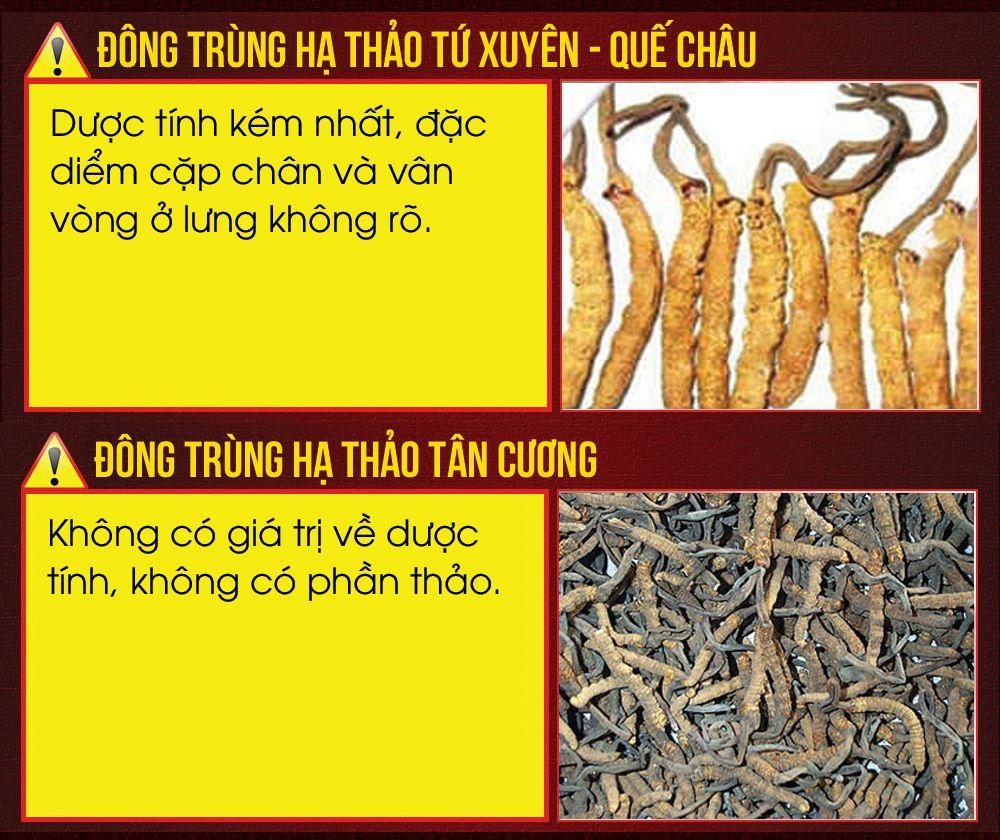 Phân biệt đông trùng hạ thảo Tây Tạng với ĐTHT kém chất lượng
