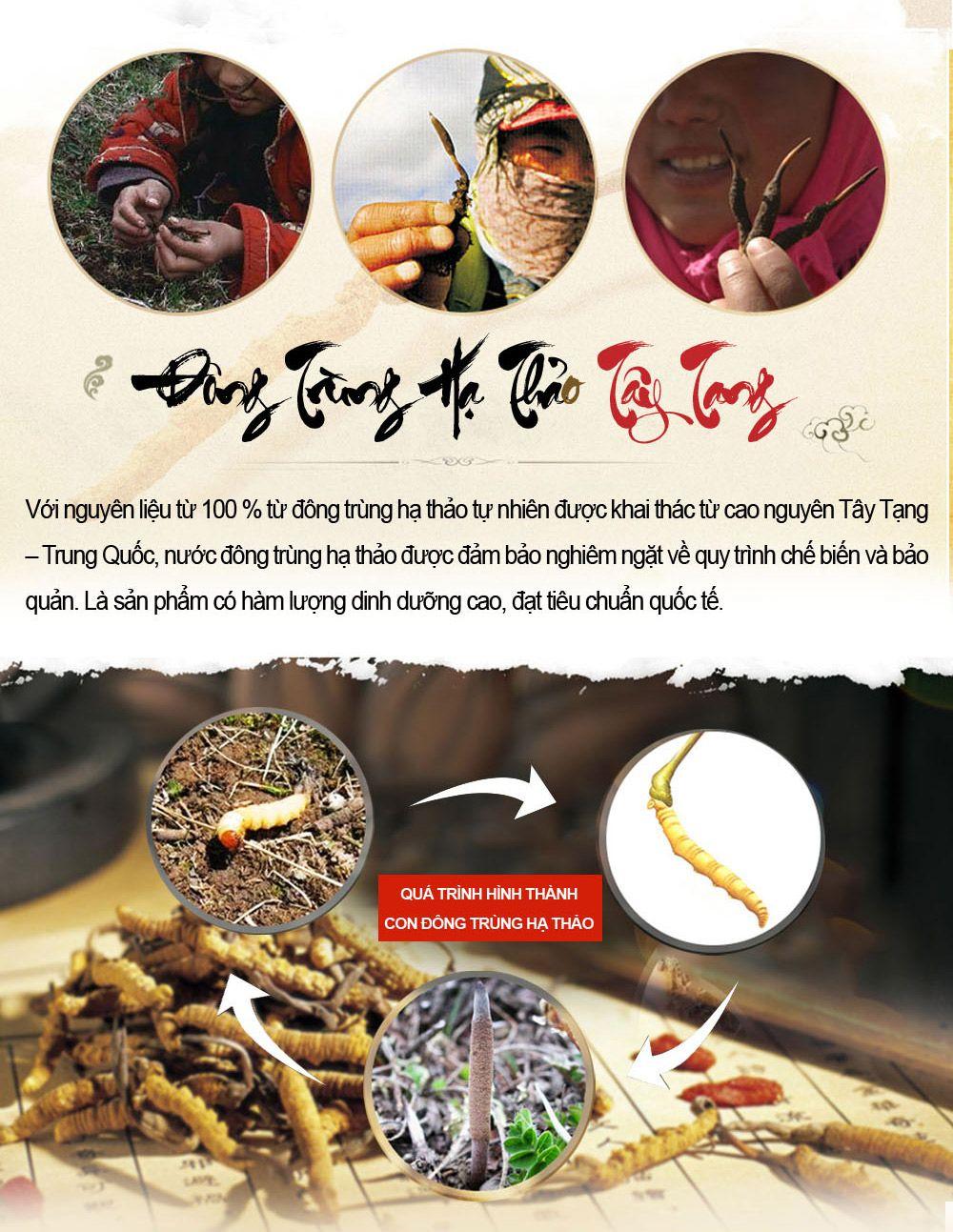 Quy trình hình thành con đông trùng hạ thảo tây tạng
