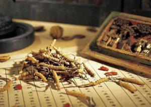 Đông trùng hạ thảo là cây hay con gì?