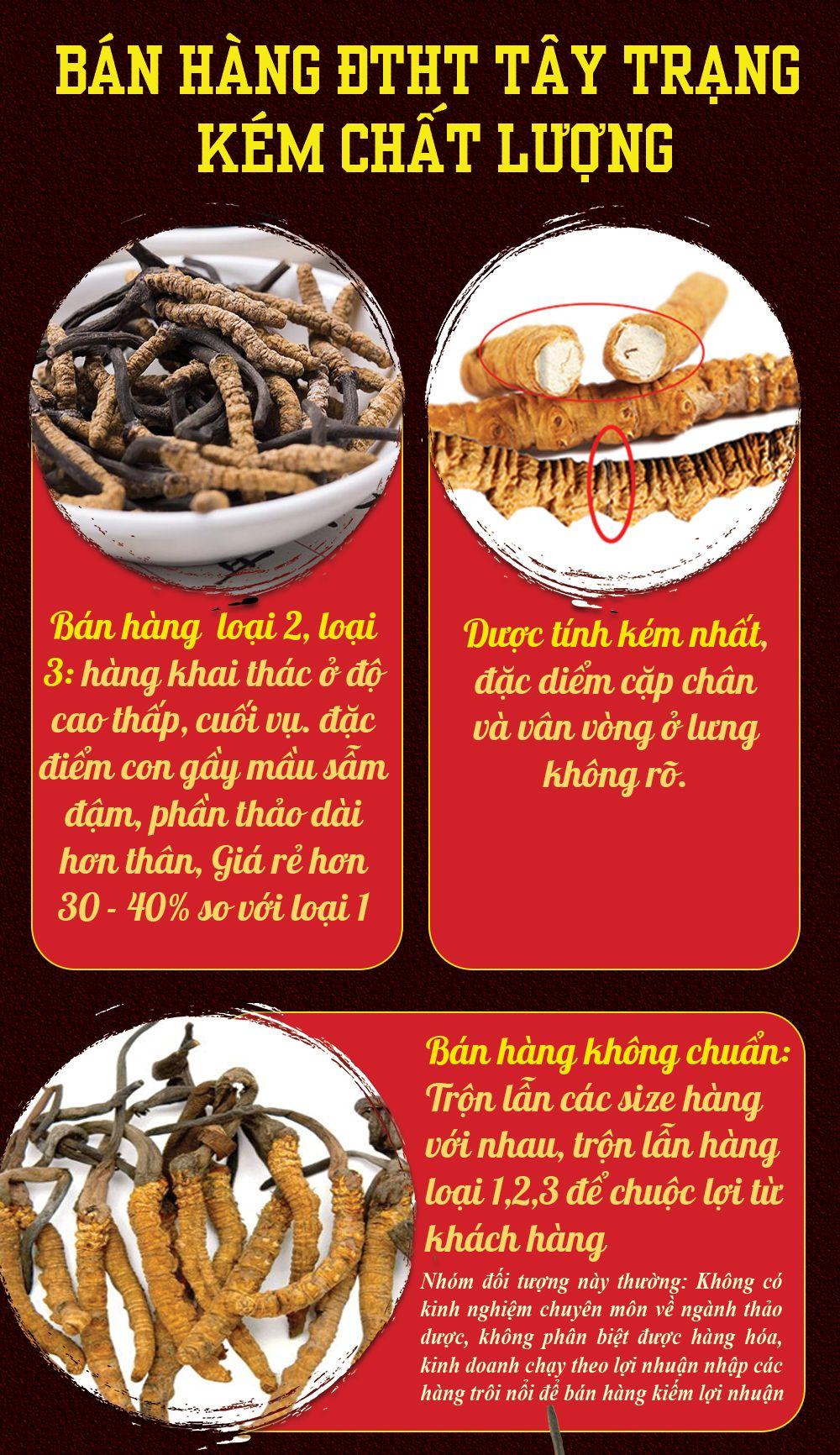 So sánh đông trùng hạ thảo Tây Tạng thật và hàng kém chất lượng