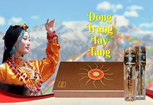 Đông trùng hạ thảo nguyên con xuất xứ Tây Tạng