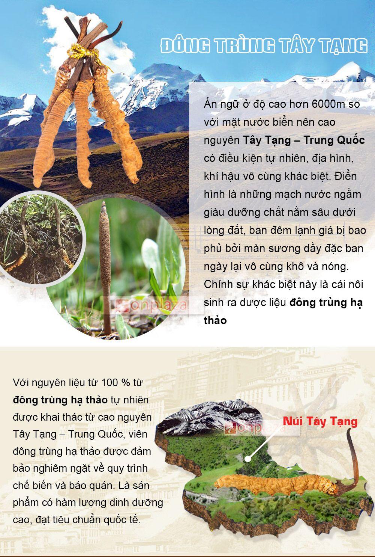 Môi trường sống của đông trùng hạ thảo Tây Tạng