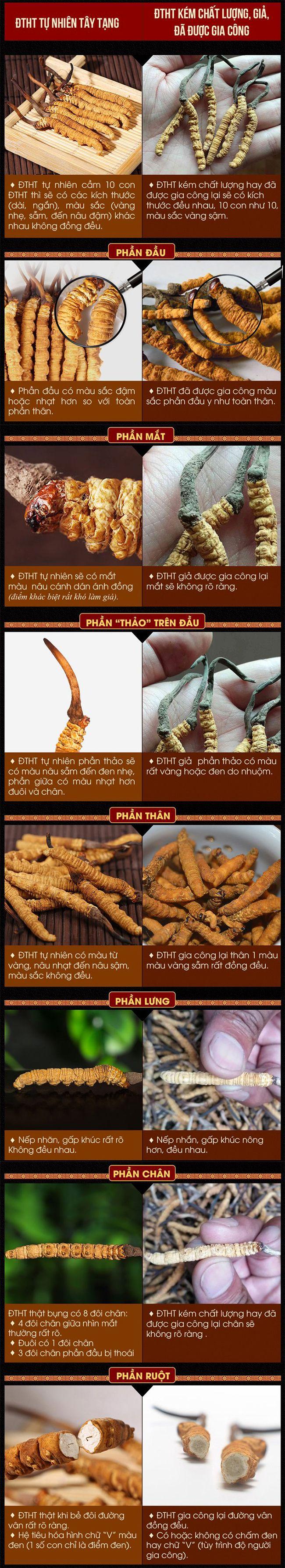 So sánh các đặc điểm khác biệt giữa đông trùng hạ thảo thật - giả