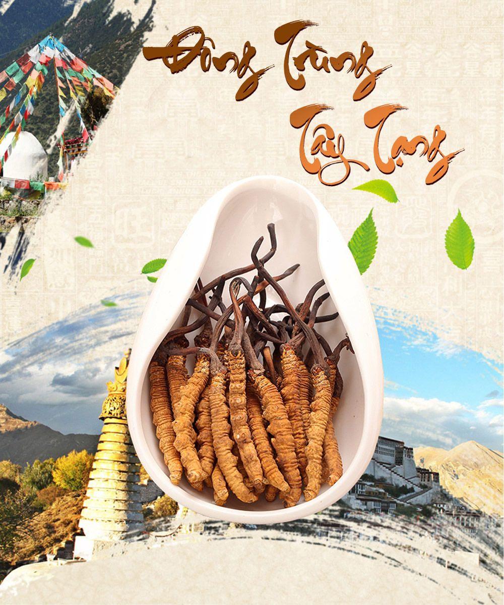 Đông trùng hạ thảo Tây Tạng - Thành phần có trong viên đông trùng