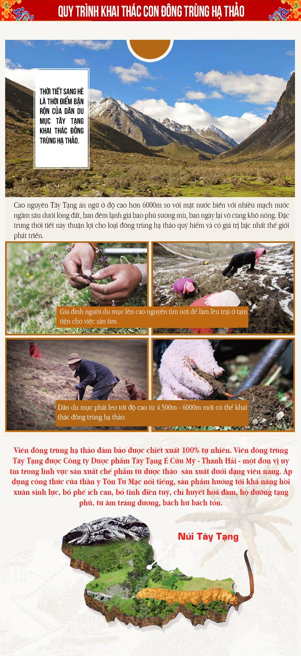 Quy trình khai thác con đông trùng hạ thảo Tây Tạng