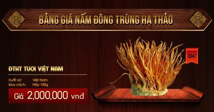 Giá đông trùng hạ thảo tươi của Việt Nam