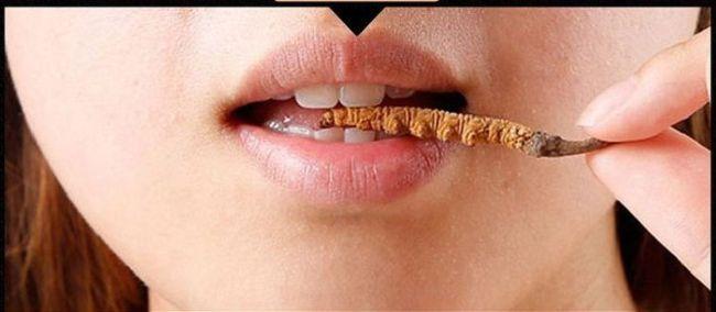 Tác dụng phụ khi ăn trực tiếp đông trùng hạ thảo nguyên con