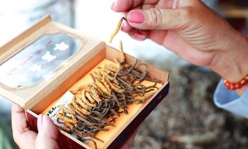Cách bảo quản đông trùng hạ thảo tươi khô ngay tại nhà