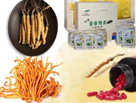 Phân loại đông trùng hạ thảo - Loại nào dùng tốt nhất