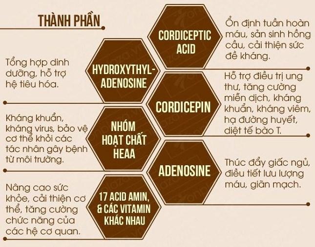 Thành phần trong đông trùng hạ thảo và tác dụng đối với cơ thể