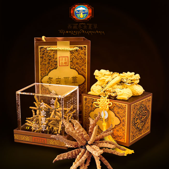 Con đông trùng hạ thảo Tây Tạng hộp quà biếu chạm rồng cao cấp 20gr