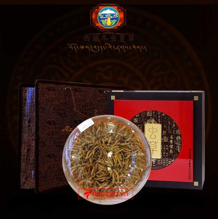 Đông trùng hạ thảo Tây Tạng cao cấp hộp 100gr loại 400 con