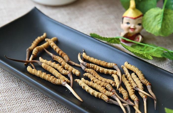 Con đông trùng hạ thảo tự nhiên Tây Tạng