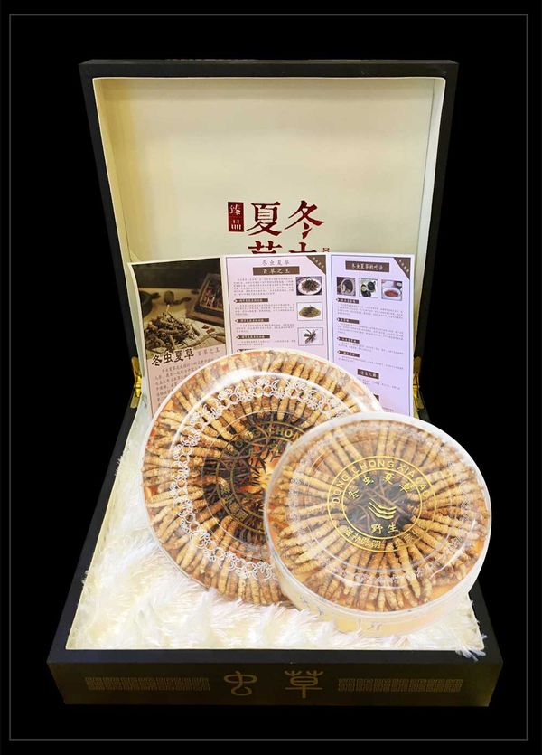 Hộp quà biếu đông trùng hạ thảo nguyên con 100gr 400 con