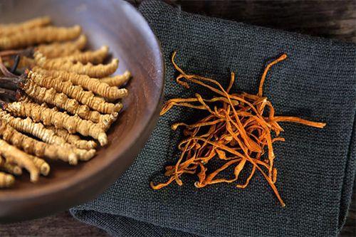 Đông trùng hạ thảo khô là gì? Tác dụng và cách dùng như thế nào?