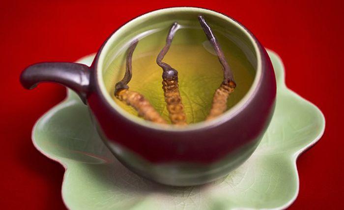 Pha trà đông trùng hạ thảo khô uống hàng ngày