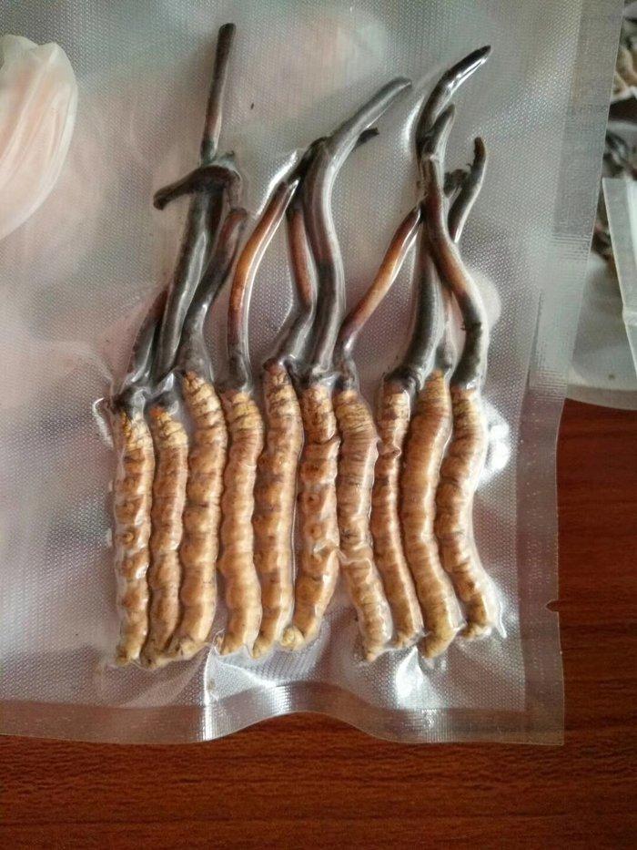 Đông trùng hạ thảo tươi Tây Tạng nguyên con loại 1gram 2