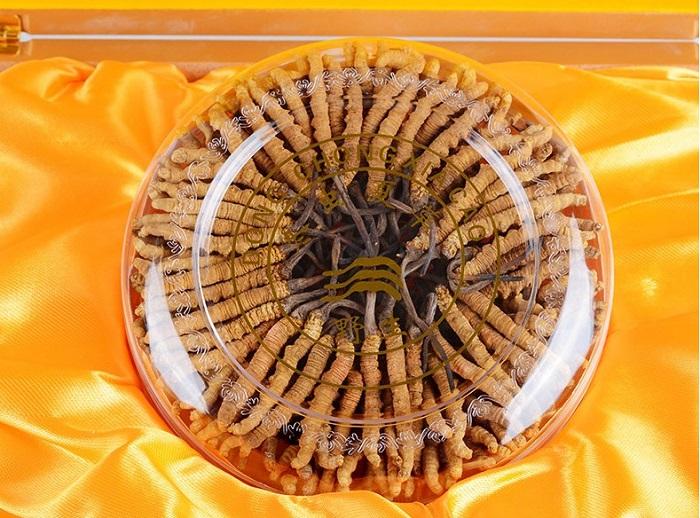 Đông trùng hạ thảo Tây Tạng loại 160 con hộp 100gr 4