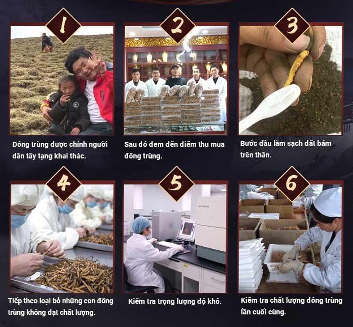 Đông trùng hạ thảo Tây Tạng loại 160 con hộp 100gr 6