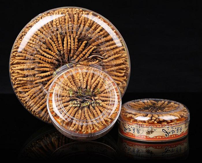 Đông trùng hạ thảo Tây Tạng cao cấp loại 300 con/ 100g 3